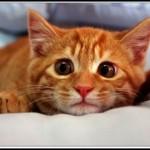 Wystraszony kot